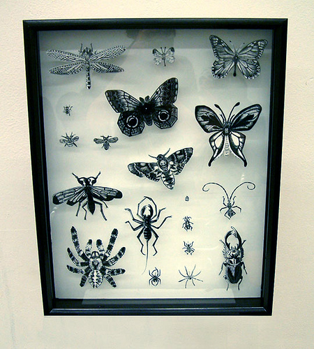InsectCollection-Done-brookeduckart