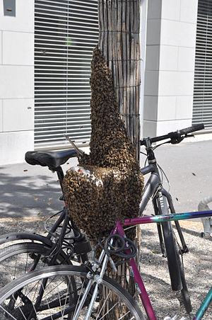 English: Swarm of bees on bicycle